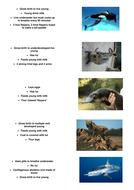 Vertebrate classification - card sort activity