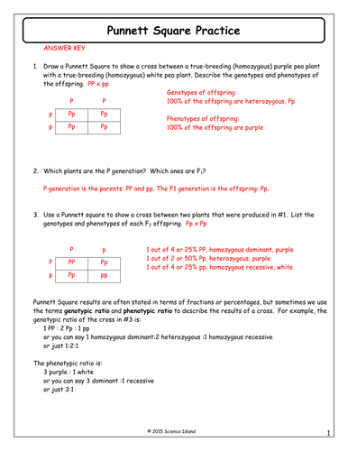 Worksheets Punnett Square Worksheet Answers inheritance activities genetics terminology and punnett squares 7 square practice answer key docx