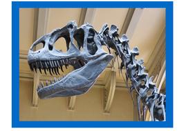 dinosaur-skeletons.PDF