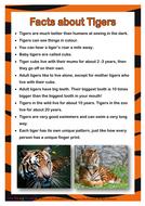 Tiger_Facts.pdf