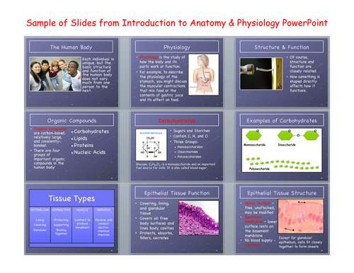 Introduction to Anatomy and Physiology PowerPoint and Notes by ...