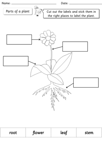 Year 1 science plants topic pack by highwaystar teaching year 1 science plants topic pack by highwaystar teaching resources tes ccuart Images