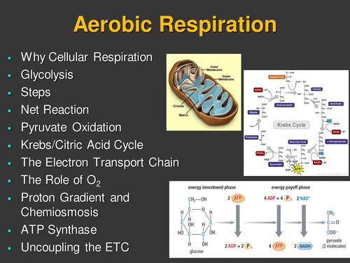 Aerobic Respiration Senior Biology PowerPoint Lesson 2 – Aerobic Respiration Worksheet
