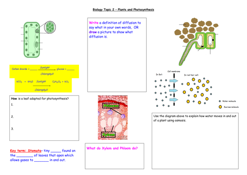New specification 2016 ks3 and gcse biology revision maps health new specification 2016 ks3 and gcse biology revision maps health and plants and photosynthesis by katherinefoster91 teaching resources tes ccuart Images