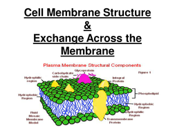 new aqa as biology cell membrane structure exchange across