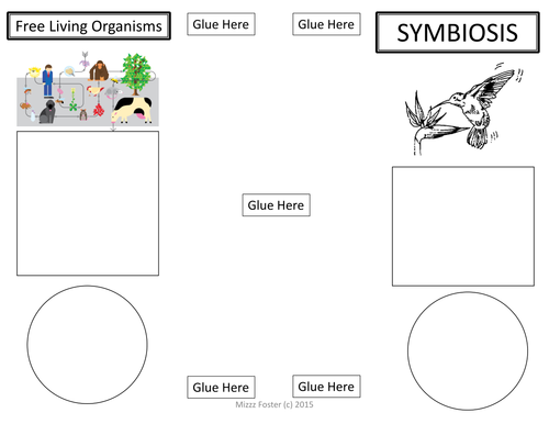SYMBIOSIS Brochure Foldable Graphic Organizer Interactive – Symbiotic Relationships Worksheet