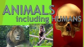 Image result for Animals including Humans ks2