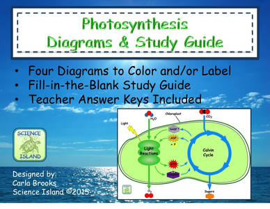photosynthesis diagrams and study guide by scienceisland us teacher lessons tes. Black Bedroom Furniture Sets. Home Design Ideas