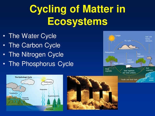 Printables Cycles Of Matter Worksheet cycling of matter in ecosystems powerpoint lesson notes and activity package by teachwithfergy teaching resources tes