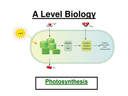 Aqa a level biology photosynthesis ppt workbook by jam2015 aqa a level biology photosynthesis ppt workbook ccuart Choice Image