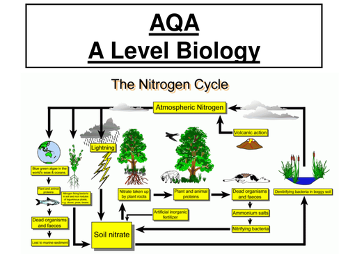 Worksheets Nitrogen Cycle Diagram Worksheet 601602603 4 nitrogen cycle g4 lessons tes teach aqa a level biology ppt worksheet practical