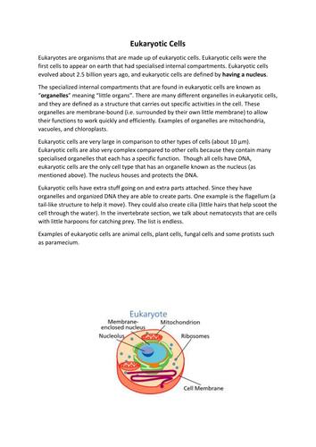 Prokaryotes And Eukaryotes By Jenniferseon Teaching Resources Tes