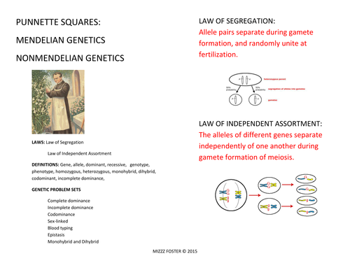 Genetics Punnett Squares Mendel NonMendelian Bundle with Power – Mendelian Genetics Worksheet
