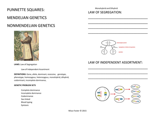 genetics punnett squares mendel non mendelian student worksheets with key by mizzzfoster. Black Bedroom Furniture Sets. Home Design Ideas