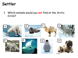 Where did all the Polar Bears go?