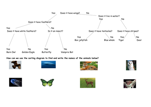 Using Sorting Branch Diagrams Full Lesson By Megaalex66 Teaching