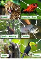 Animal-Adaptions-Resources.pptx