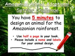 Amazonian Animal Adaptations