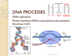 DNA Processes Bundle: DNA Replication and Protein Synthesis: Power ...