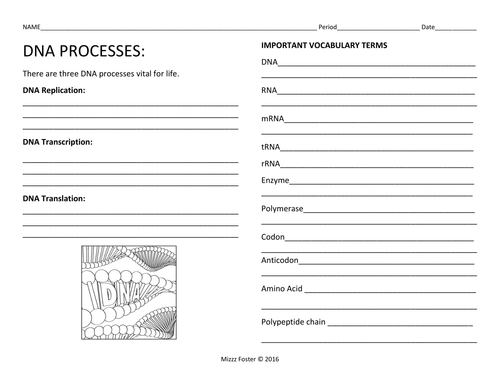 DNA Processes DNA Replication and Protein Synthesis Worksheets – Dna Replication Worksheet