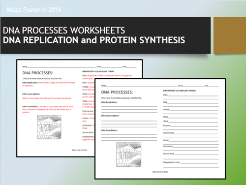 Dna Processes Dna Replication And Protein Synthesis