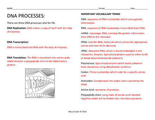 DNA Processes: DNA Replication and Protein Synthesis Worksheets with ...