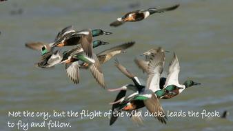 wild-duck.pdf
