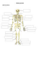 Skeleton-and-joints-worksheets.docx