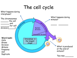 Mitosis for new gcse by vornie79 teaching resources tes the cell cycle diagram for printingpptx ccuart Image collections