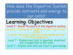 Digestion-Booklet.pptx