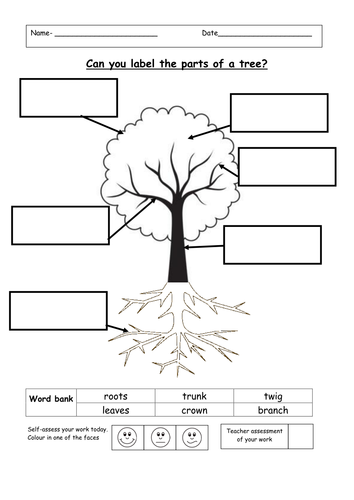 Label The Parts Of A Tree By Ruthbentham Teaching