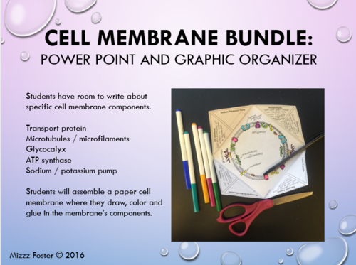 All Worksheets Cell Membrane Worksheet Answer Key Free – Cell Membrane and Tonicity Worksheet Answers