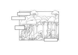 3---Rainforest-layers-handout.docx