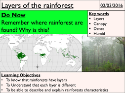 3---Layers-of-the-rainforest.pptx
