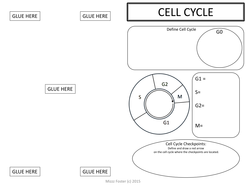 Cell Cycle, Mitosis & Meiosis Graphic Organizer Foldout