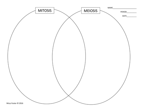 Cell Cycle Mitosis Meiosis Graphic Organizer Foldout Foldables – Meiosis Diagram Worksheet