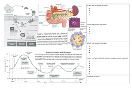 regulation of blood glucose and secondary messenger system by