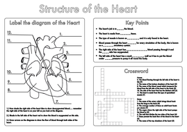Printables Biology Worksheets Pdf biology worksheets pdf davezan gcse heart and lung structure by beckystoke
