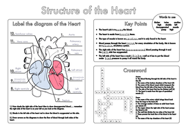 Gcse biology heart and lung structure worksheets by beckystoke heart structure worksheet answerspdf ccuart Image collections