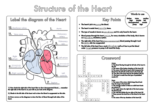 Gcse biology heart and lung structure worksheets by beckystoke gcse biology heart and lung structure worksheets by beckystoke teaching resources tes ccuart Image collections