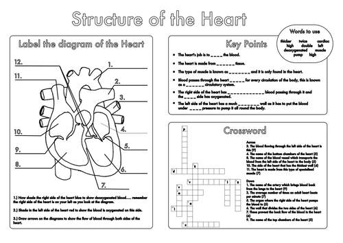 {GCSE Biology Heart and Lung Structure Worksheets by beckystoke – Structure of the Heart Worksheet Answers