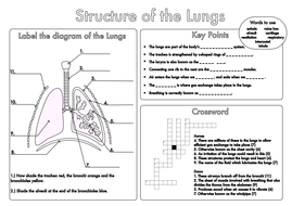 Year 2 School Worksheets Gcse Revision Lung Structure Worksheet By Beckystoke  Teaching  5th Grade Probability Worksheets Word with Worksheets For Letter T Gcse Lung Structure Worksheetpdf  Free Printable Music Worksheets Pdf