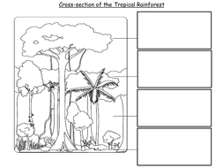 lesson 2 cross section of the rainforest by emsie125 teaching resources tes. Black Bedroom Furniture Sets. Home Design Ideas