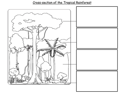 Worksheets Layers Of The Rainforest Worksheet lesson 2 cross section of the rainforest by emsie125 teaching worksheet etu ppt