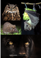 astroedu1605-nocturnal-animals.pdf