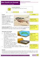 Year 3 | Rocks | How fossils are formed