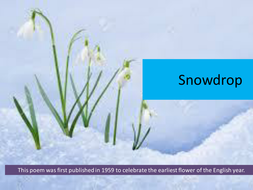 ted hughes poem snowdrop