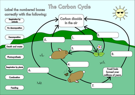 Printables Carbon Cycle Worksheets gcse carbon cycle worksheets and a3 wall posters by beckystoke diagram a4 poster colour