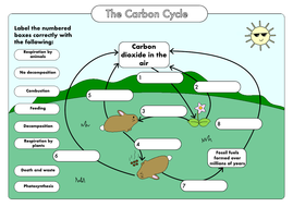 Gcse carbon cycle worksheets and a3 wall posters updated by gcse biology carbon cycle diagram a4 poster colour ccuart Image collections
