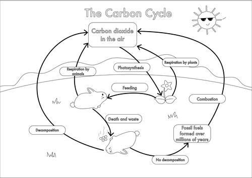 Worksheet Carbon Cycle Worksheet gcse carbon cycle worksheets and a3 wall posters by beckystoke poster black white can be coloured in
